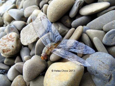 20130714 Dragonfly